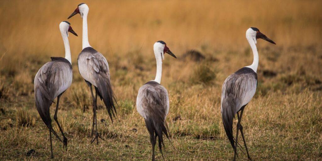 Foto på fåglar