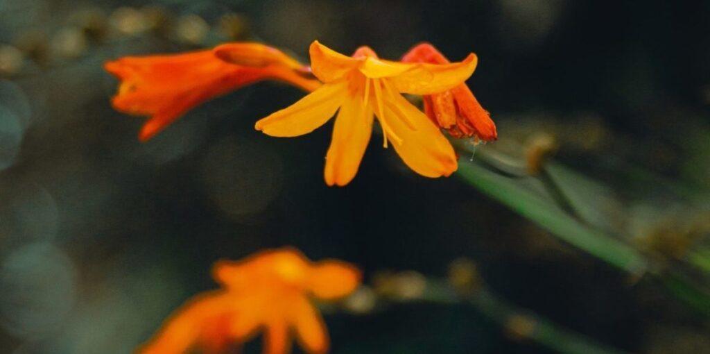 Foto på blomma