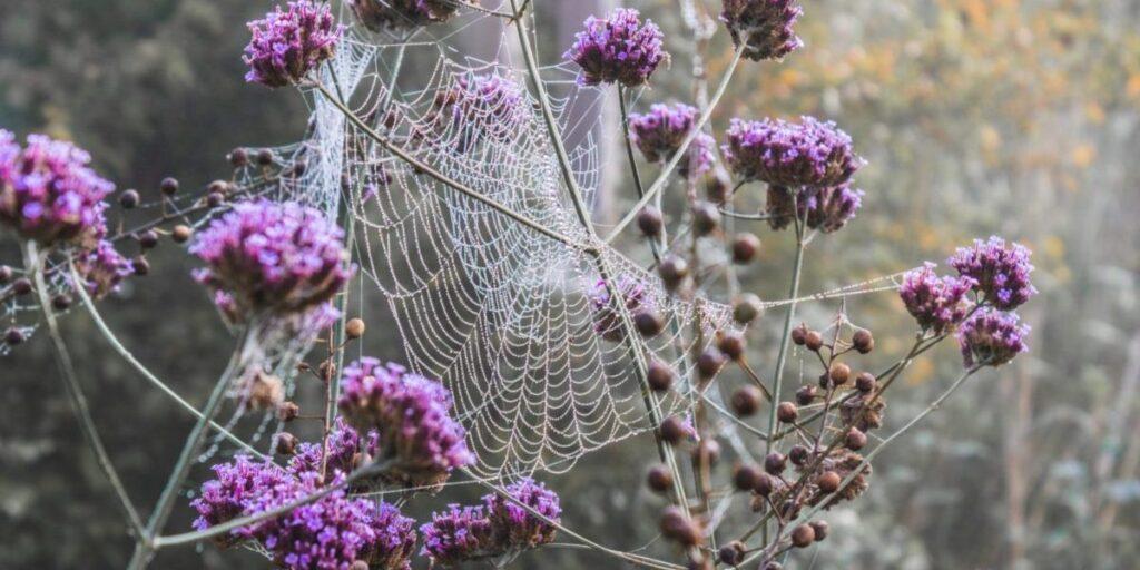 Foto på blommor och spindelnät