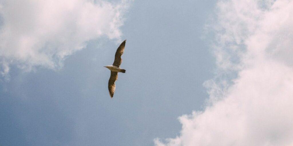 Fågel som flyger